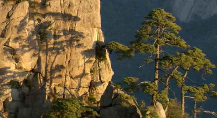 Baum Schatten Abendsonne