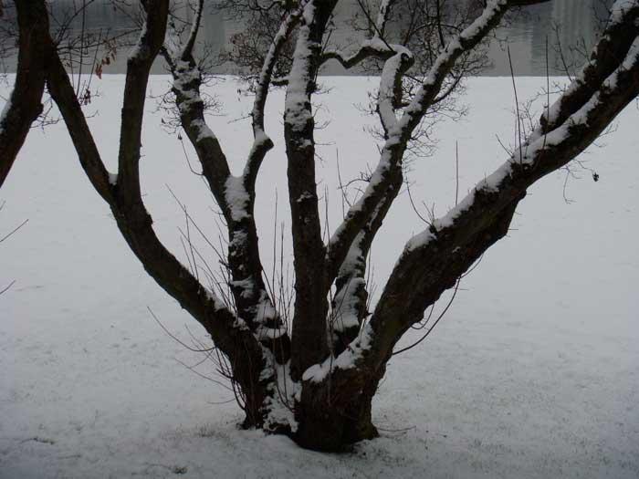 Schneedecke Schnee Vaum beschneit