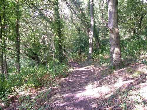Waldweg sonnig