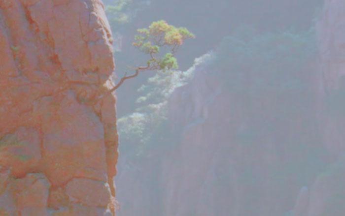 Einsamkeit Baum Tal Vergessen