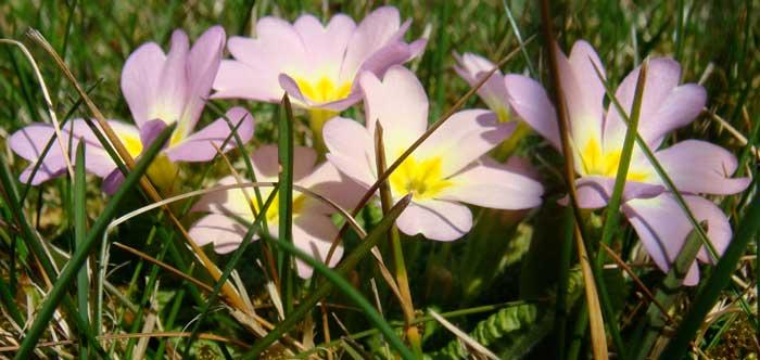 Frühling Wiese Blume