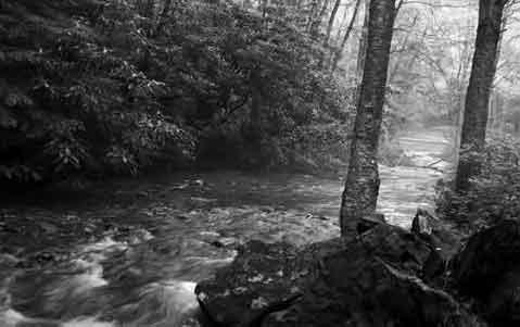 Quelle Wald r&g