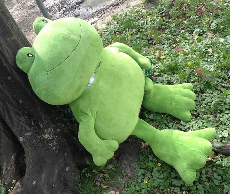 frosch-gruen